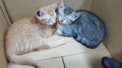 Bony & Tigreton